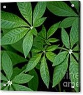 Green Is Beautiful Acrylic Print