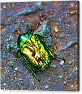 Green Junebug Acrylic Print