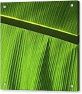 Green Leaf, Close-up Acrylic Print