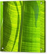 Green Leaf Acrylic Print by Setsiri Silapasuwanchai