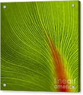 Green Leaves Series 10 Acrylic Print