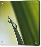 Green Line In The Droplet Acrylic Print
