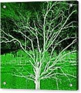 Green Magic Tree Acrylic Print