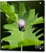 Green Oak Leaf And Flower Acrylic Print