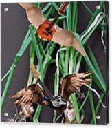 Green Onions Acrylic Print by Eric Kempson