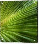 Green Palm Acrylic Print by Al Hurley