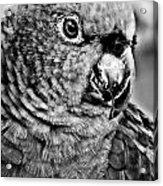 Green Parrot - Bw Acrylic Print