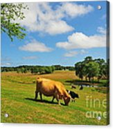 Green Pasture Acrylic Print by Catherine Reusch Daley