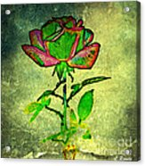Green Rose Acrylic Print