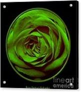 Green Rose On Black Acrylic Print