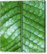 Green Scaly Leaf Pattern Acrylic Print