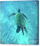 Green Sea Turtle 2 Acrylic Print
