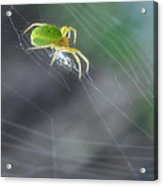 Green Spider 1.0 Acrylic Print