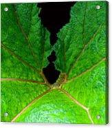 Green Spider Leaf Acrylic Print