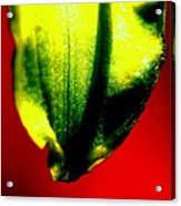 Green Tear Acrylic Print