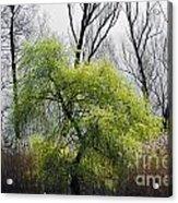 Green Tree And Pampas Grass Acrylic Print