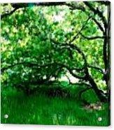 Green Tree Acrylic Print