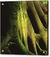 Green Trunk Acrylic Print