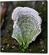Green Turkey Tails Acrylic Print