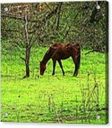 Greener Grass Acrylic Print