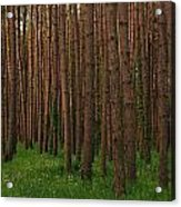 Greening In The Woods Acrylic Print