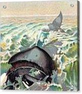 Greenland Whale Acrylic Print