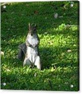 Greynolds Park Squirrel Acrylic Print