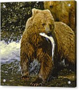 Grizzly Bear And Cubs Acrylic Print