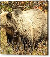 Grizzly Camouflage Acrylic Print