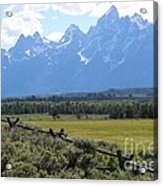 Grizzly Country Acrylic Print