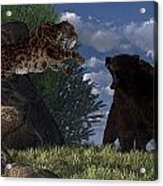 Grizzly Vs. Saber-tooth Acrylic Print