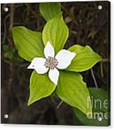 Ground Flower Acrylic Print
