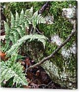 Ground Foliage Near Mountain Lake Acrylic Print
