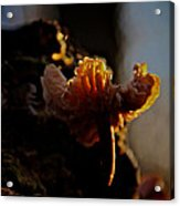 Ground Level Abstract Acrylic Print by Odd Jeppesen
