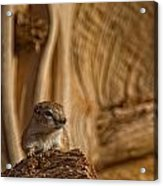 Ground Squirrel At Monument Valley Acrylic Print