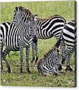 Group Of Barcodes Acrylic Print