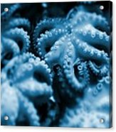Group Of Octopuses Acrylic Print by Victor Habbick Visions