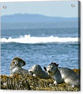 Guardians Of Agementicus Acrylic Print