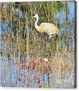 Guarding The Nest Acrylic Print by Lynda Dawson-Youngclaus