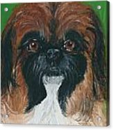 Gucci The Peke Acrylic Print