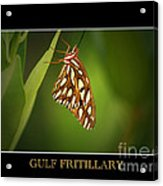 Gulf Fritillary 2 Acrylic Print