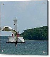 Gull And Lighthouse Acrylic Print