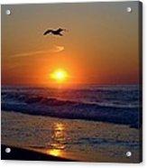 Gull Coast Acrylic Print