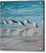 Gulls On Beach Acrylic Print