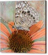 Hackberry Emplorer Butterfly Acrylic Print