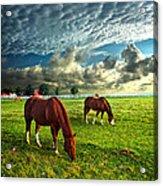 Hailey's Horses Acrylic Print