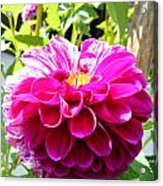 Half And Half Flower Acrylic Print