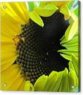Half-bloom Beauty Acrylic Print