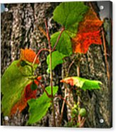 Halfway Colored For Autumn Acrylic Print