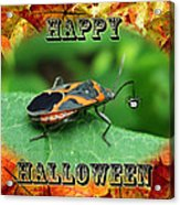 Halloween Greeting Card - Box Elder Bug Acrylic Print